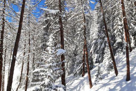 Wald im Schnee.jpg