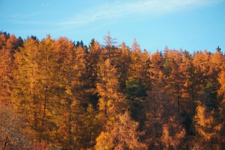 Herbst03.JPG