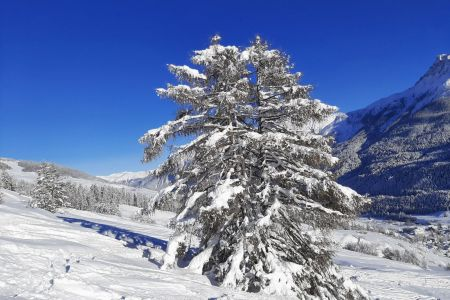 Tanne im Schnee.jpg